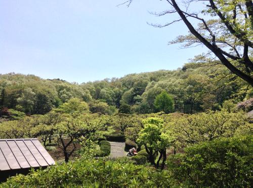 yakushi3_20130413.jpg